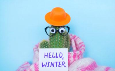 Jardinage : winter is coming !