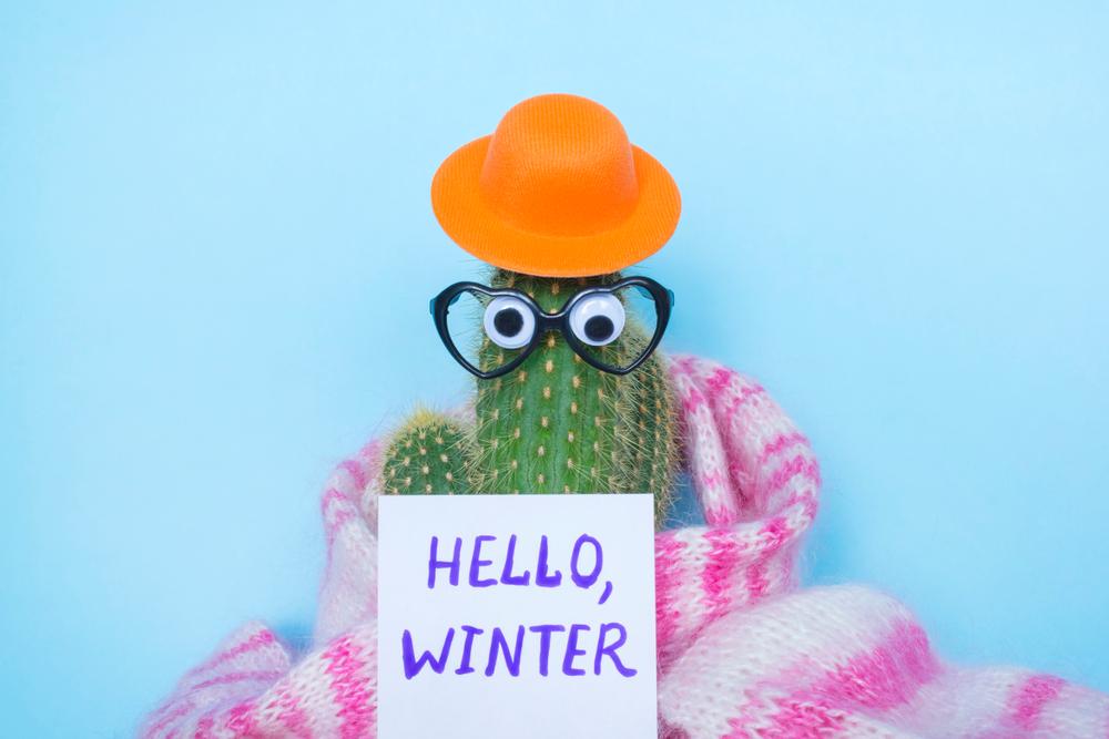 prendre soin de ses plantes en hiver