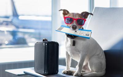 Voyage professionnel : bien le vivre sans fatigue